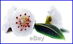 GORGEOUS Paul STANKARD Block with MOUNTAIN LAURELS on BRANCH Art Glass PAPERWEIGHT
