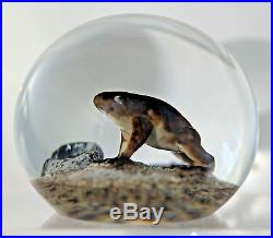 LARGE Super AWESOME Cool TRABUCCO Studio FROG Art Glass PAPERWEIGHT