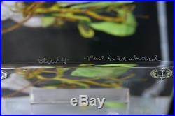 Large GORGEOUS Paul STANKARD Block MORNING GLORY STUDY Art GLASS Paperweight