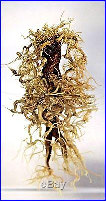 SPECTACULAR Paul STANKARD Art Glass BOTANICAL Sculpture ASSEMBLAGE Studio BLOCK